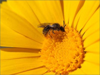 Григорий Сковорода — Пчела и Шершень