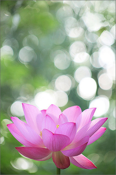 Шри Свами Шивананда — МОЛИТВА