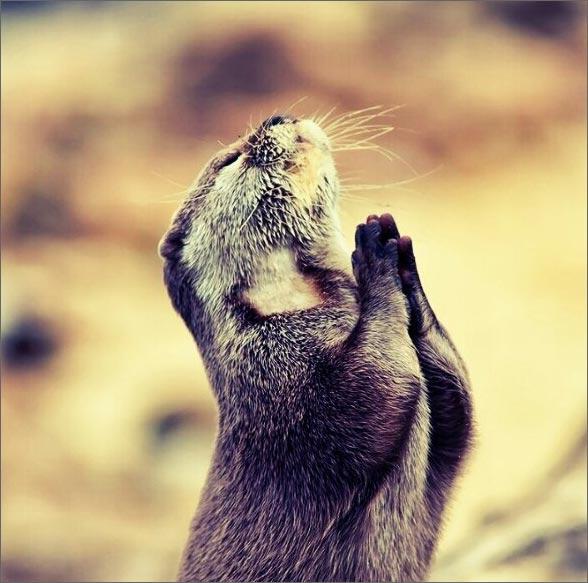 Советы Иоанна Златоуста о молитве. Место. Время. Положение. Внимание