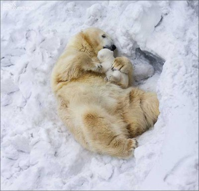 Мама и белый мишка