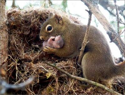 Мама заботится