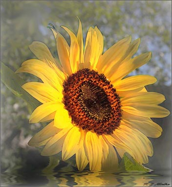 Фото - цветок веры