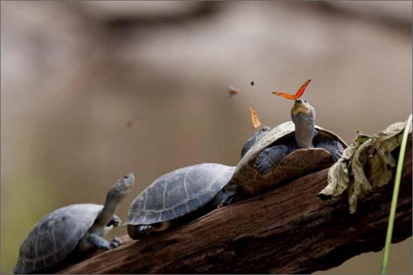 Фото единства в природе