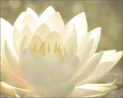 Семинар: Стяжание Святого Духа. Практики Одухотворения
