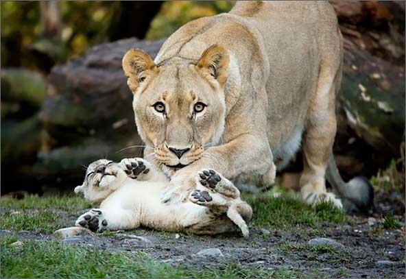 Мама чешет животик