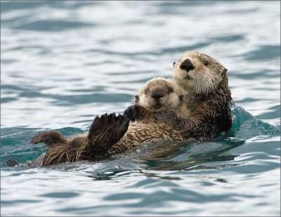 Плаваю с мамой