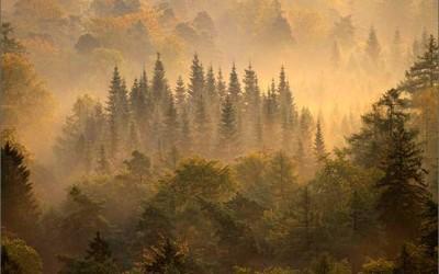 Чувство благоговения перед красотой природы дарит здоровье