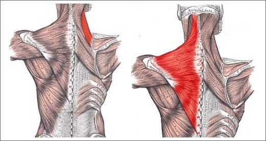 Упражнения для шеи и плечевого пояса
