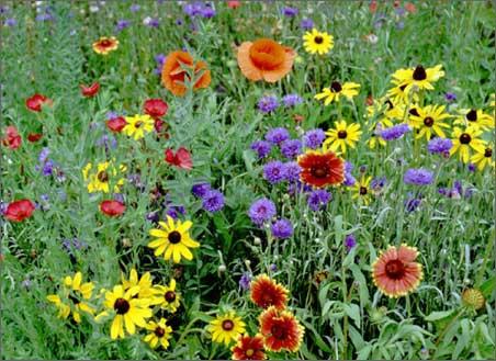 Фото цветов в природе