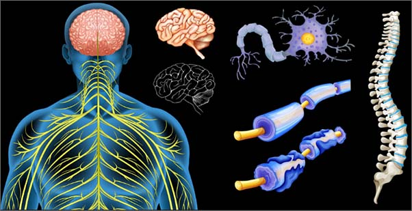 Фото принцип болезни рассеянного склероза
